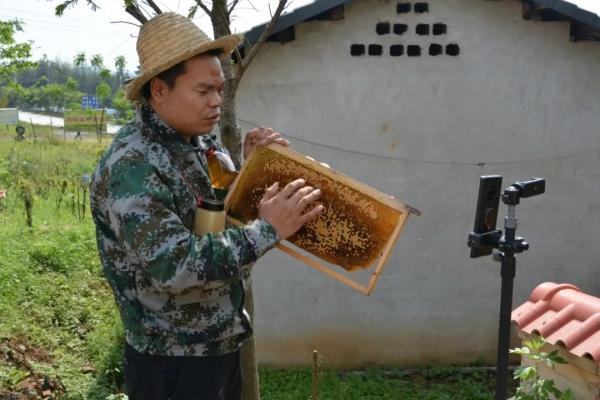 """嗨~ 听说北湖区有只会""""直播""""的小蜜蜂"""