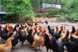 郴州十八仙生态农业开发有限公司