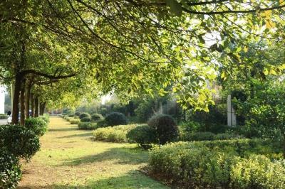 专业承包绿化养护与管理