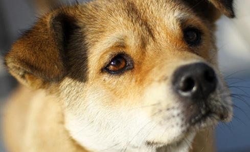 【带我回家】郴州爱心人士领养狗狗预约